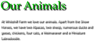 Our Animals At Whitehill Farm we love our animals. Apart from the Show Horses, we have two Alpacas, two sheep, numerous ducks and geese, chickens, four cats, a Weimaraner and a Miniature Labradoodle.